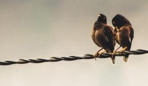 paartherapie symbolisch durch vogelpaar